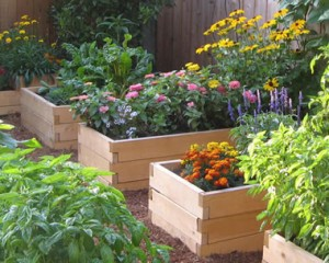 Raised-Garden-Beds-300x240.jpeg